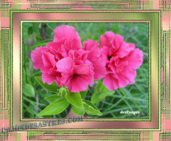 Unas bonitas fotografías de flores | Cajón desastres